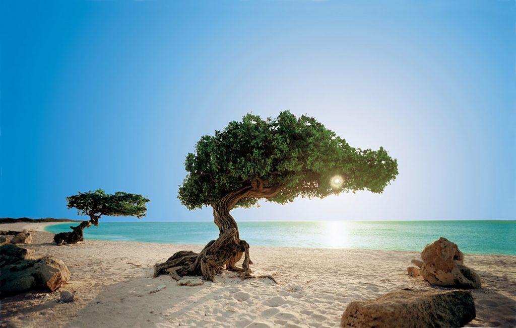 Aruba Tipps und Fakten