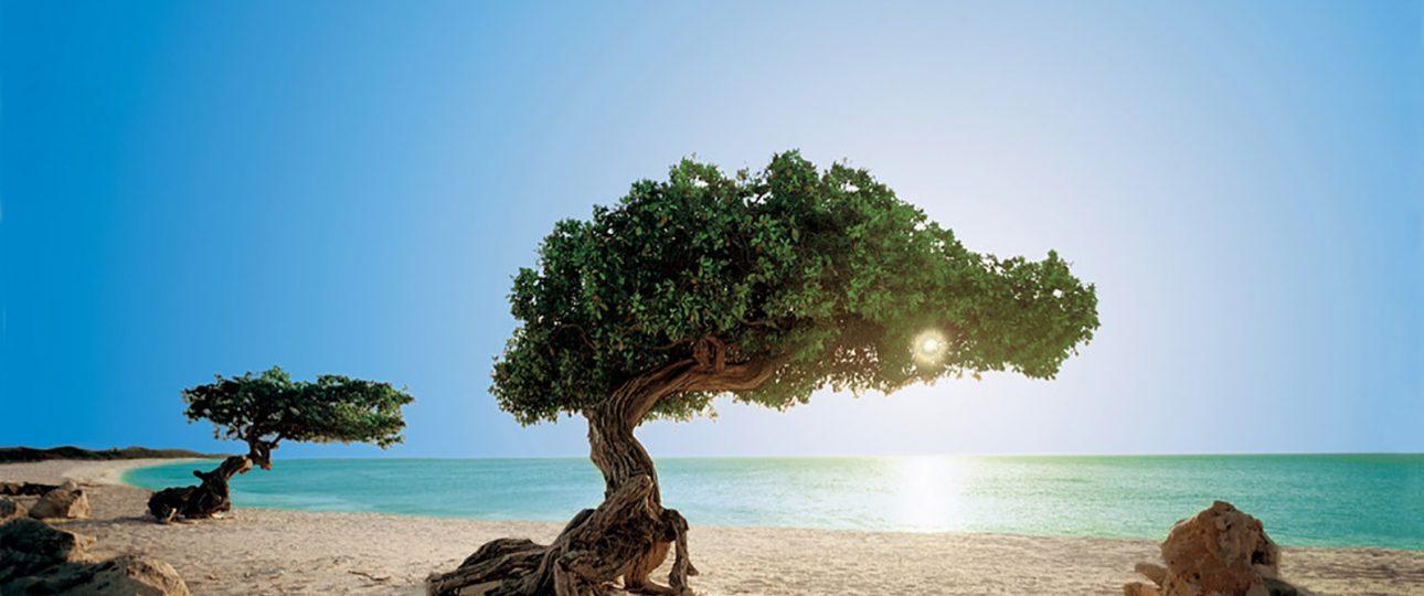 ABC Inseln Aruba Tipps Fakten