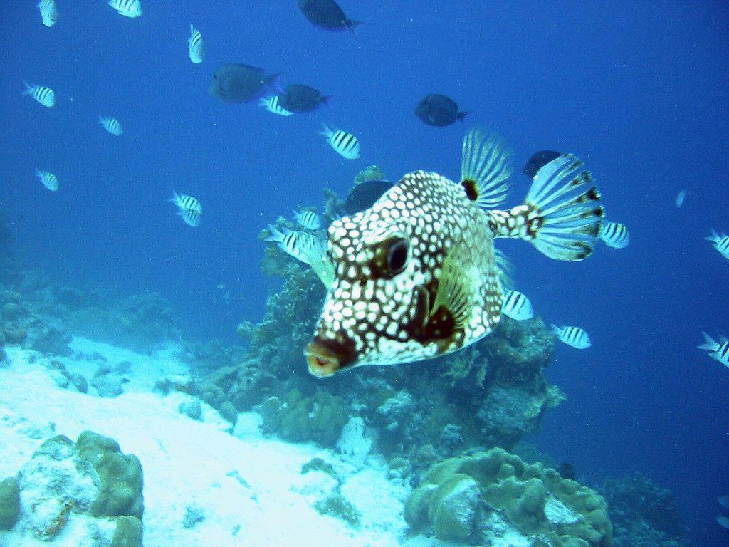 Tauchen auf Aruba