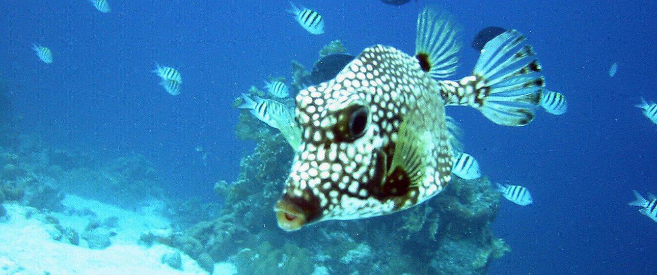 Karibik Tauchreisen ABC Inseln Aruba
