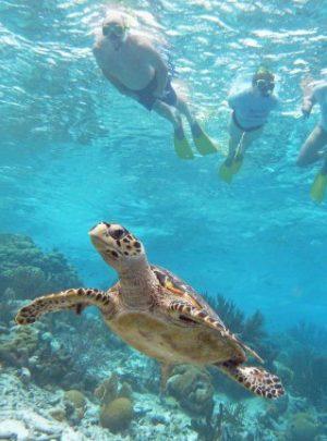 Tauchreisen Karibik Bonaire Aruba Curacao