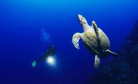 Karibik Urlaub ABC-Inseln Sporturlaub Tauchen Bonaire