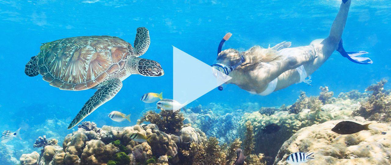 Schnorcheln mit Schildkröten Curacao