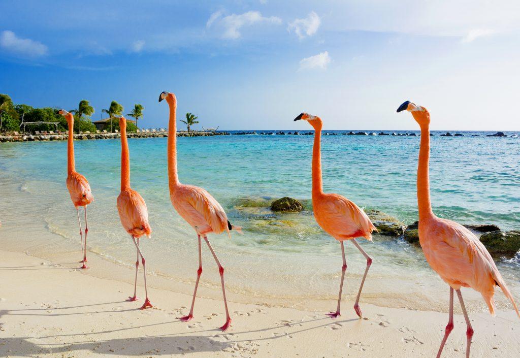 Gesundheitsvorgaben für Reisende Aruba